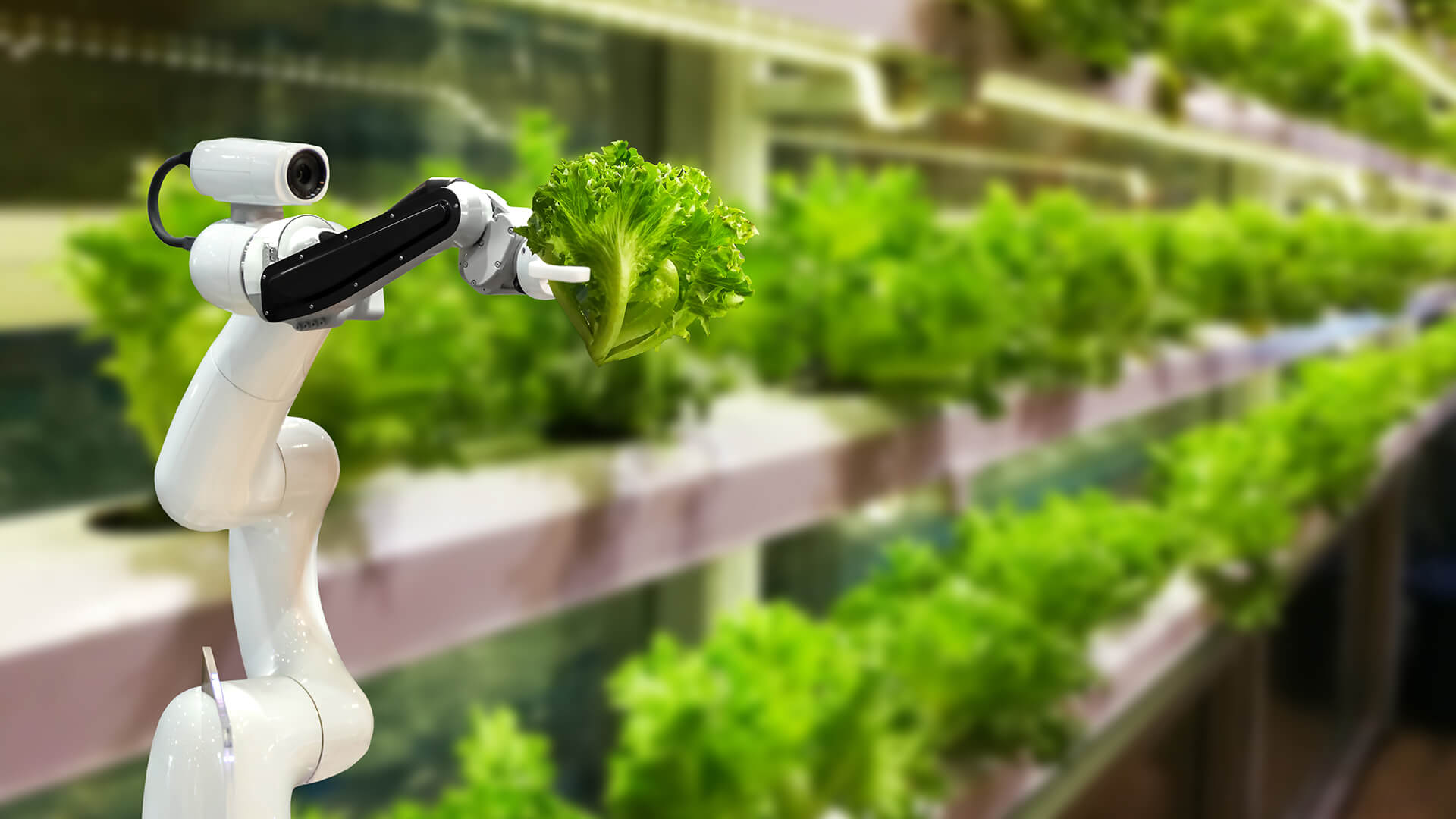 Agriculture and FoodTech - Pearl Cohen